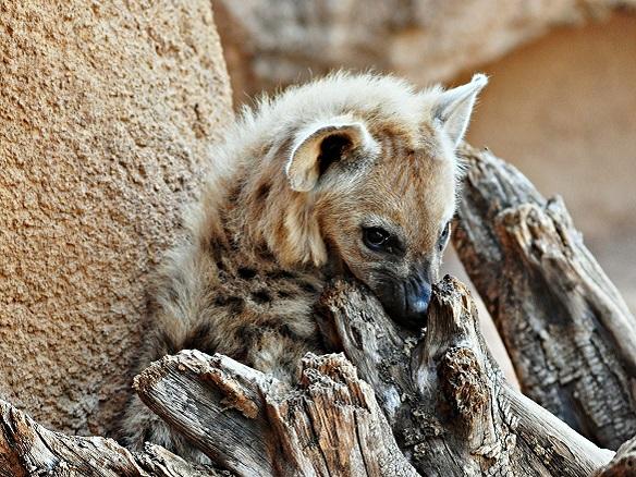 Animales den el Bioparc de Valencia